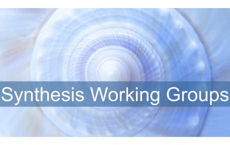 Synthesis Working Groups